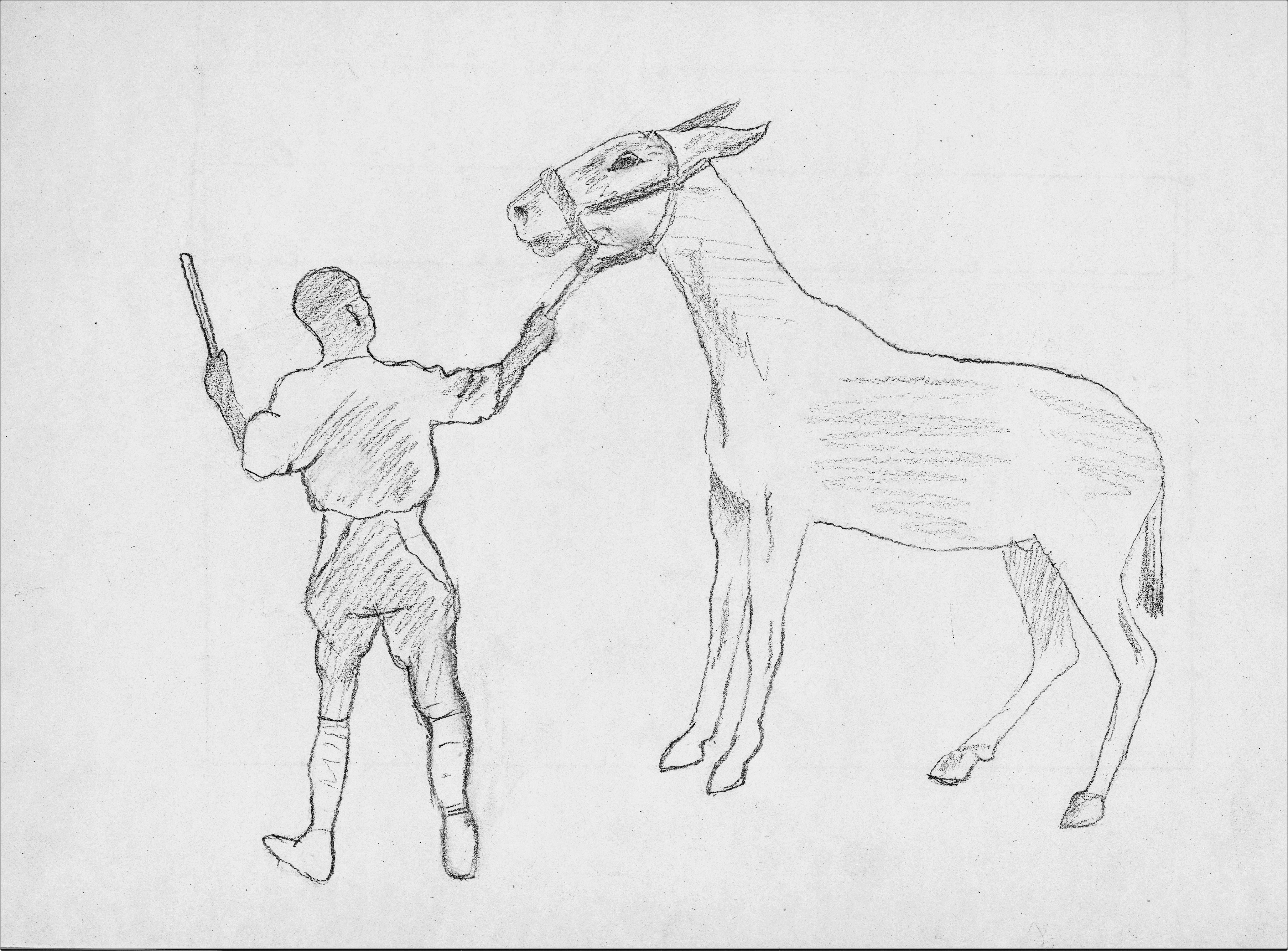 A muleteer handling a mule.